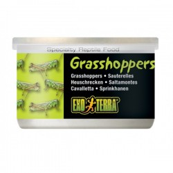 Canned Foods - Grasshoppers